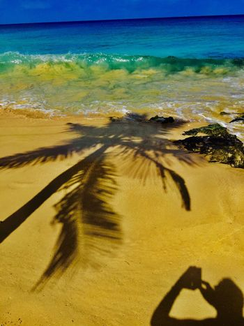 Waysofseeing Ihaveathingforshadows Sea Beach Sand Shadow Nature Outdoors Barbados Water Beauty In Nature Scenics Sunlight No People Horizon Over Water Sky Close-up EyeEm EyeEmBestPics EyeEm Best Shots Iponeonly Helloworld Instamood Ocean Ocean View Palm Tree The Great Outdoors - 2017 EyeEm Awards Love Yourself