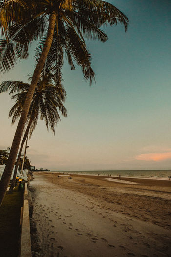 Huahin beach thailand Beach Palm Tree Water Sea Tropical Climate Sky Land Tree Beauty In Nature Tranquility Nature Horizon Sand Scenics - Nature Horizon Over Water Tranquil Scene Plant Sunset Incidental People Outdoors Coconut Palm Tree Tropical Tree Palm Leaf