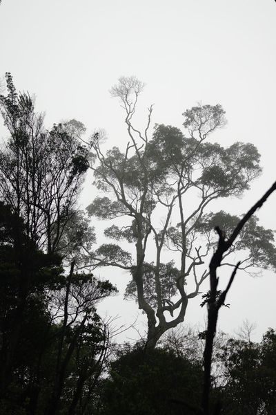 When the fog is coming down to the dead crater, at that moment we know the grey color Gunung Salak Kawah Ratu Kawah Mati Fog Tree Branch Nature Outdoors Low Angle View Growth Day Tranquility Tree Trunk Silhouette Beauty In Nature Scenics Tranquil Scene Shades Of Winter An Eye For Travel