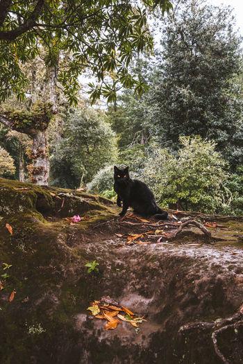 Black cat sitting on a tree