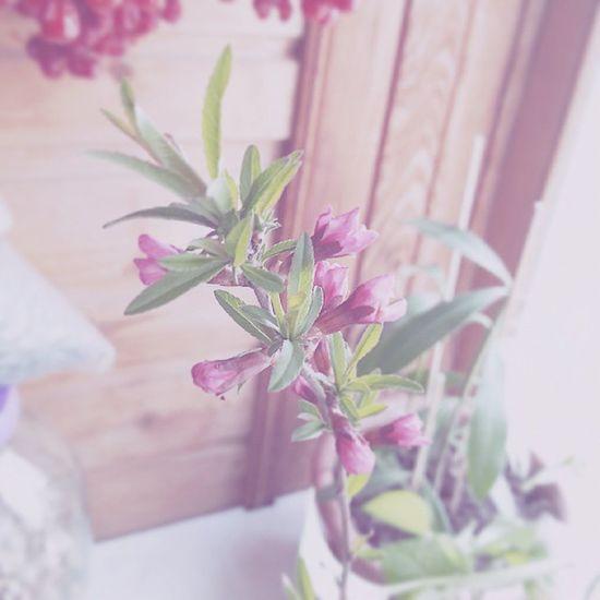багульник ветка растение