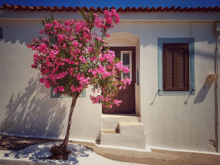 GREECE ♥♥ Griechenland Samos Greakenland Street House Tree Flower Window Whitewashed Door Architecture Building Exterior Built Structure Blooming In Bloom