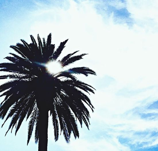 Sun Palm Trees Beautiful Nature Beautiful View ❤ Sky_collection Skyporn Summer Views Sun Hiding