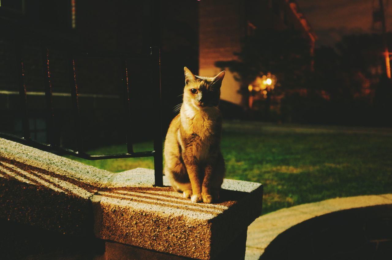 Alertness, Animal Themes, Color Image, Domestic Animals, Domestic Cat