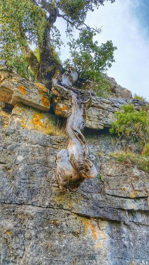 L'albero in Riposo Montefumai Magnificentsardegna Colours Single Tree