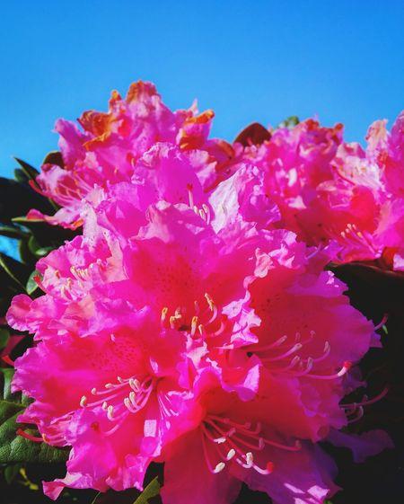 pink summer. Flower Porn EyeEm Nature Lover Denmark Summer