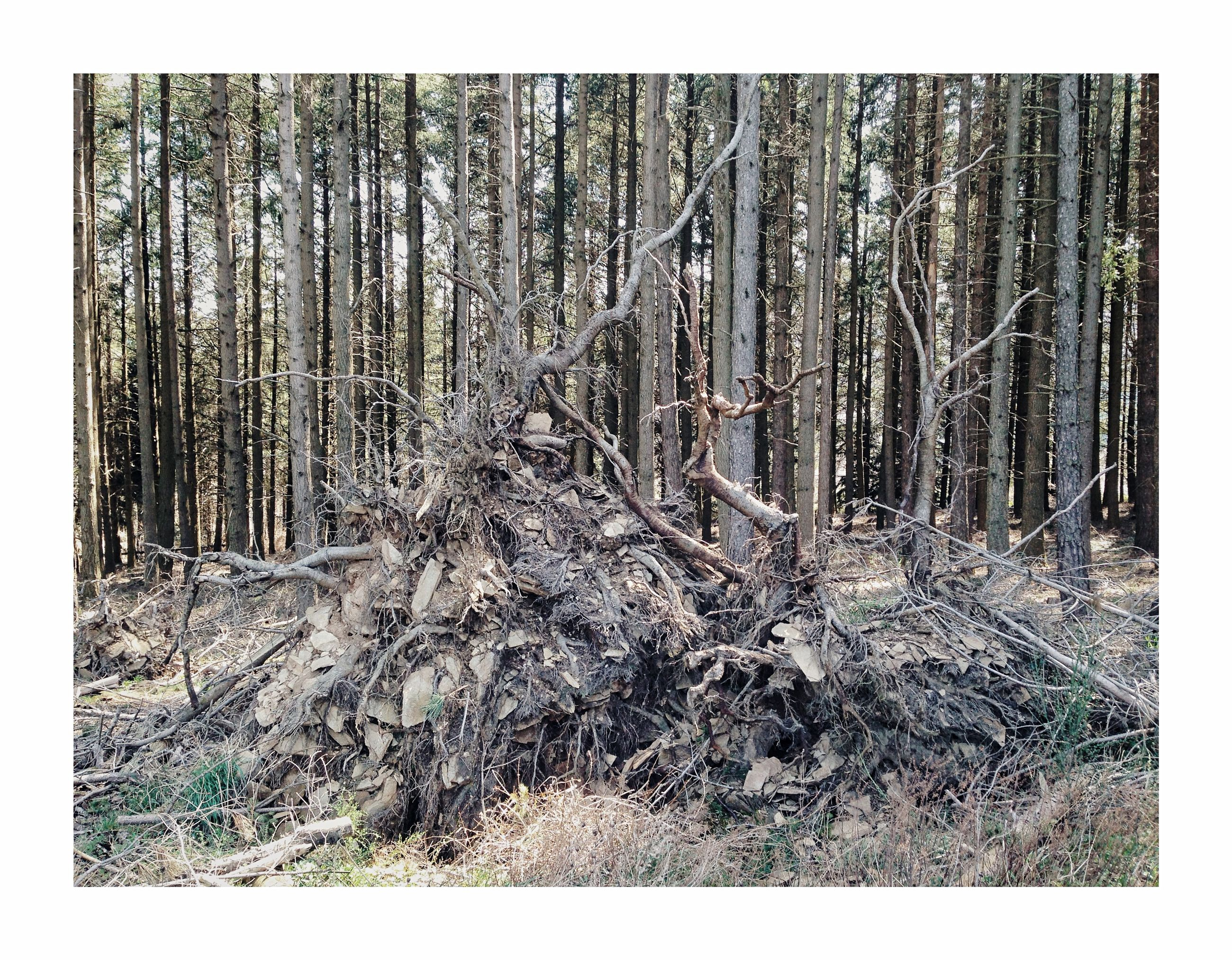 tree, forest, land, plant, tree trunk, trunk, nature, woodland, no people, auto post production filter, transfer print, day, tranquility, growth, environment, non-urban scene, outdoors, landscape, scenics - nature, tranquil scene, dead plant