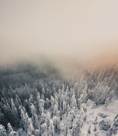 High angle view of trees in forest during winter