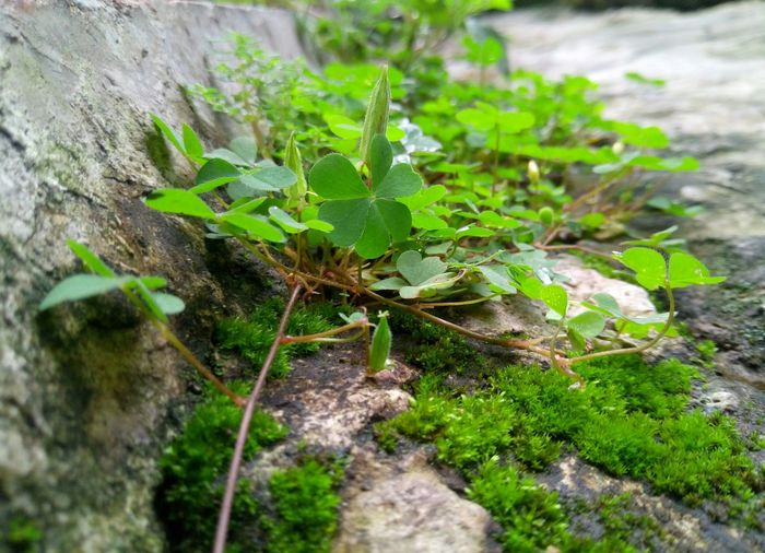 Growth Green Color No People Plant Nature Outdoors Close-up Leaf Freshness Day Hahaha :-)  If You Know What I Mean  Hahahaha 😂😂😂😂😂 Green Green Green!  Beauty Nature Do You See What I See? Small Nature Nature Photography Naturelovers Green Green Green!