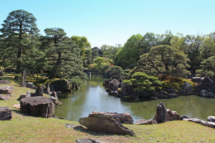 The pond of the Ninomaru Garden at Nijo Castle has a large pond with three islands and features numerous carefully placed stones and topiary pine trees in Kyoto, Japan Beauty In Nature Day Green Color Idyllic Japanese Garden Kyoto, Japan Landscape Nature No People Outdoors Pond Reflection Rocks And Water Scenics Spring Stones Sunlight And Shadow Sunny Day Tree Water