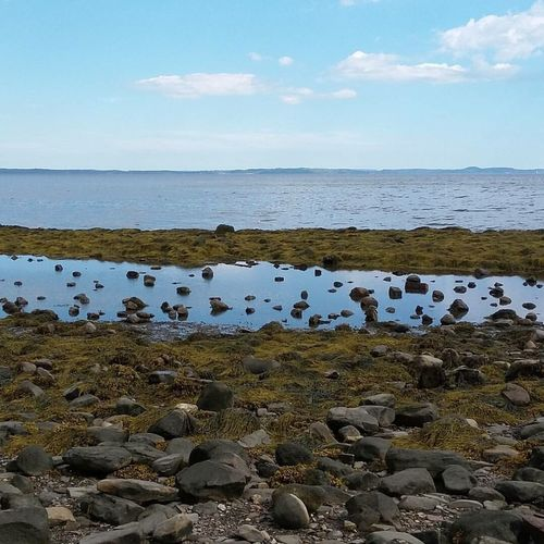 Maines coast. Sky Water Sea Nature Beauty In Nature Scenics Tranquil Scene Beach Horizon Over Water No People Tranquility Outdoors Day Ocean Seaweed Maine Coastline Miles Away
