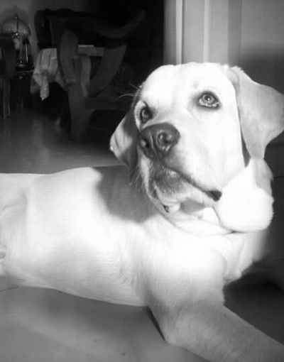 Brutus my best buddy