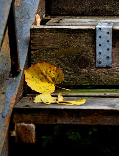 Autumn mood Autumn Colors Autumn Leaves Autumn Stairs Closeup Wood - Material Wood Wooden