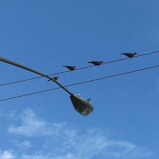 Blue Birds Perched Electric Wire Blue Sky Light Pole