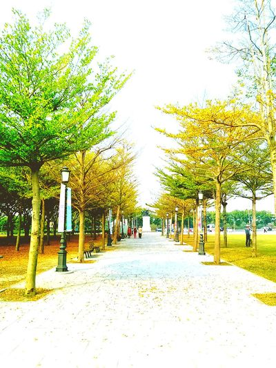 Skip the class, cuz the weather is cozy, and stroll in school is also blessing Tainan, Taiwan Cozy Weather Dont Want To Go To School