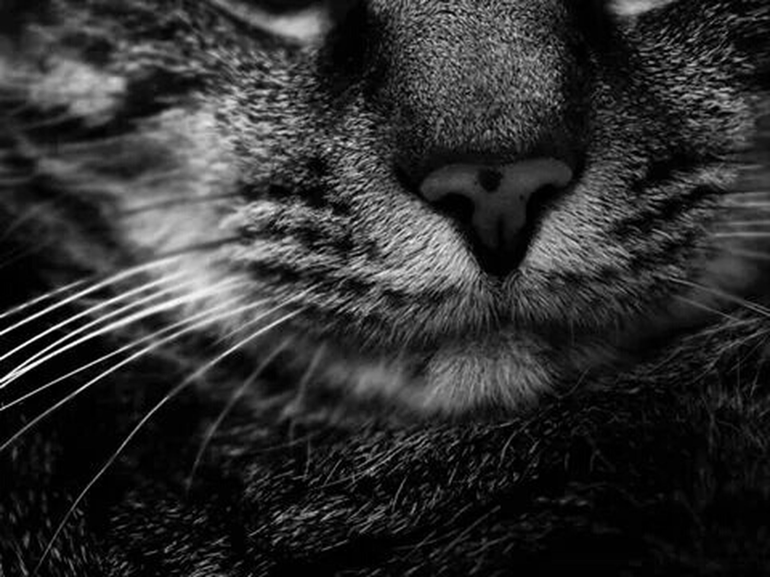 one animal, pets, mammal, animal themes, domestic animals, domestic cat, cat, feline, whisker, close-up, animal head, animal body part, selective focus, no people, relaxation, focus on foreground, day, looking away, outdoors, part of