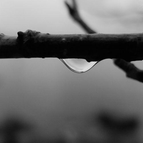 графично !!! Слеза капля вода ветка весна waterdrop drop water graphics spring vk bw blacknwhite monochrome noir чернобело монохром чб fujifilmx20 fujifilm teardrop