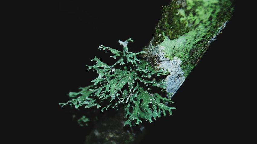 Growth Tree No People Nature Close-up Black Background Night Outdoors Branch Plant Night Garden Green And Black Moss & Lichen