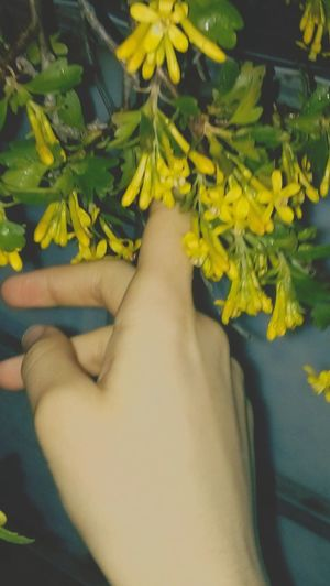 Yellow Real People Beauty In Nature Beautiful World Nature Spring Human Hand