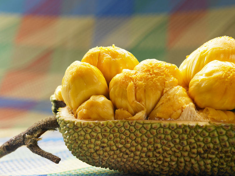 cempedak malaysia fruit Raw Tropical Fruits Asian Fruit Cempedak Close Up Exposed Half Open Strong Smell Yellow
