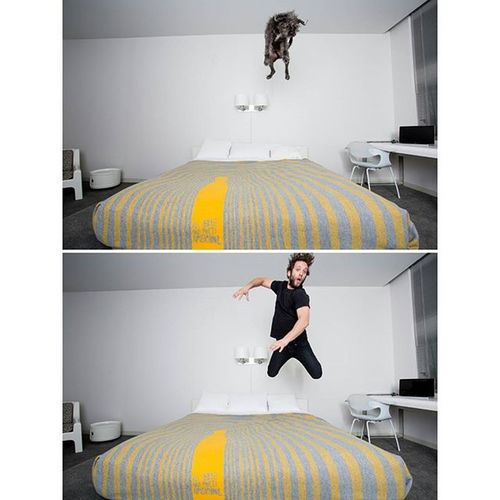 We jump on the bed at hotels too. Mikandbrix Downtownlosangeles Dogsofinstagram Amazing Family Hair Funny instacool Instafollow Jumping Thestandard Bed Model Lovely Love Cutest Instagood Instagram Me Photoftheday Instamood Sky