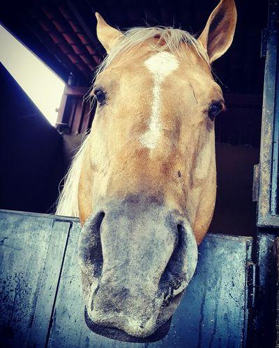 EyeEm Texture Caballo ESPAÑOL Nature Caballo Expression Horse Head Horse Color Naturelovers Hello Funny Faces FUNNY ANIMALS Funny Funny Moments