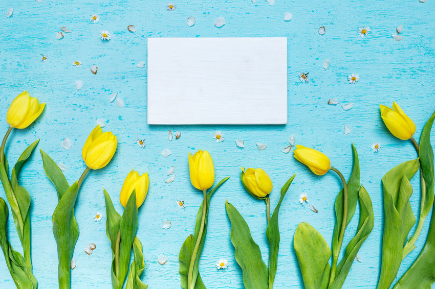 Cyan tabletop scene with yellow tulips and white wooden frame Tulips White Frame Blank Wood Frame Cyan Cyan Tabletop Flat Lay Flatlay Flowers Flowers On A Table Spring Flowers Tabletop Tabletop Scene Tulips Flowers View From Above Yellow Tulips