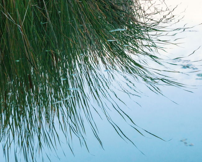 No People Low Angle View Blue Nature Day Tree Water Beauty In Nature Close-up Outdoors Reflection Growth Lake