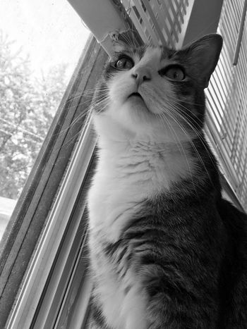 One Animal Pets Animal Mammal Domestic Animal Themes Domestic Animals No People Low Angle View Window Close-up Domestic Cat Cat Portrait Indoors