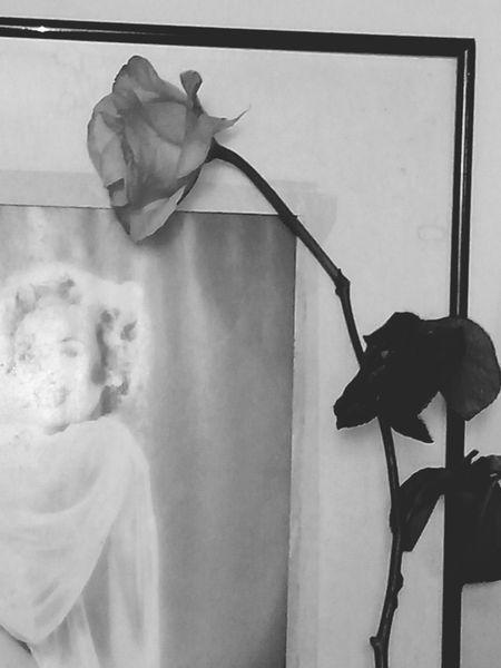 Queixo-me as rosas, mas que bobagem, as rosas nao falam. Simplesmente as rosas exalam, o perfume que roubam de ti... Cartola Poeta Rosa