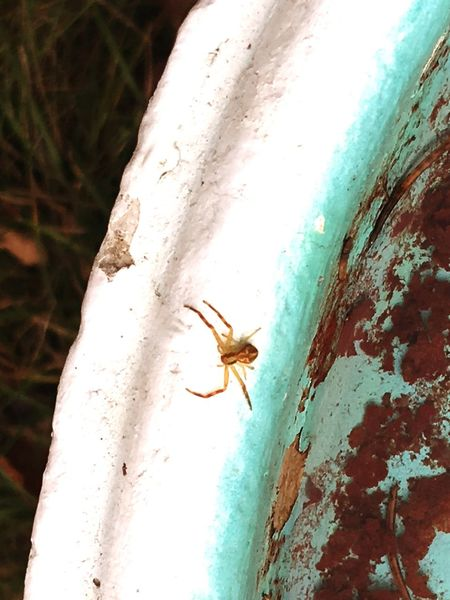 Insect Spider No People Wildlife Nature Close-up Day Chipped Paint Old Birdbath Empty Forgotten Little Animal Big World Hello World Little Spider Outdoors Outdoor Photography Perspectives On Nature