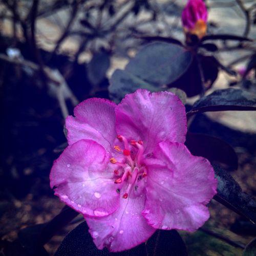 BeautifulBlooms Springhassprung MakingUpForLostTime ImSorryINeglectedEyeEm March2016