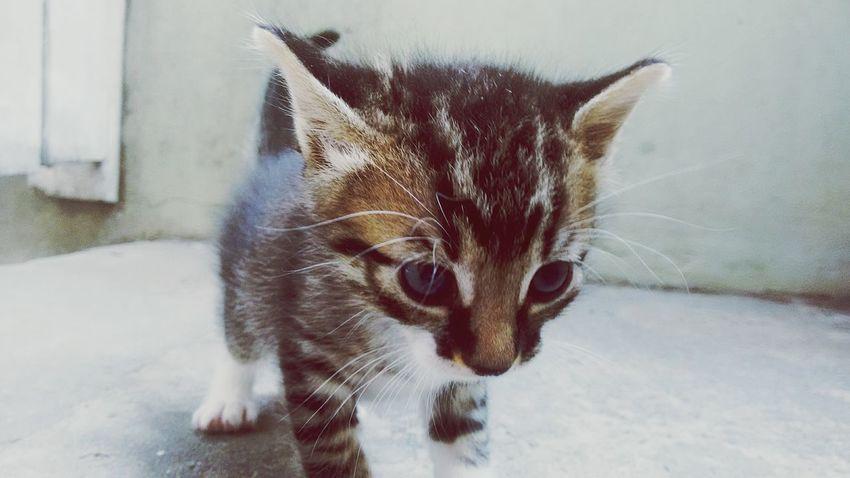 EyeEm Selects Pets Feline Cats 🐱