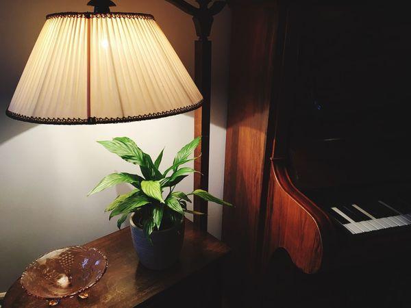 Home Plant Piano