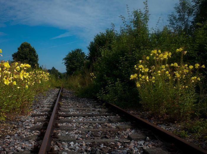 View of railroad track along trees and plants