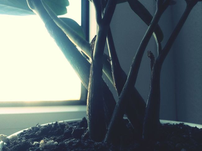 Even Plants can seem Profound ? From My Point Of View Bored EyeEm Best Shots Getting Inspired EyeEm Nature Lover Sunlight