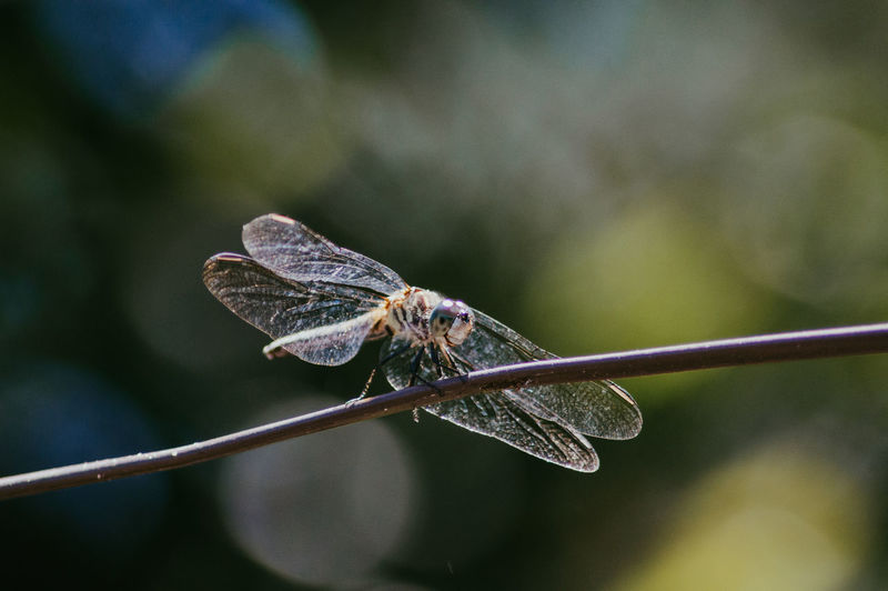Close-up of butterfly on twig