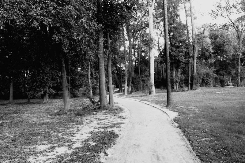 Tree Outdoors The Way Forward Landscape Forest No People Beauty In Nature Nature Tranquility Sky Leaf Road Grass Day United States Texas Nature Photography Black And White Friday Houston Texas