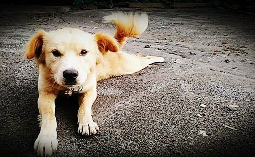 Showcase: November Cute Dog  INDONESIA Guidedog I Love My Dog Smiley Face Doglovers EyeEm Indonesia Mobile Photography Yogyakarta, Indonesia