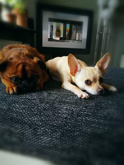 Amigo & Chica