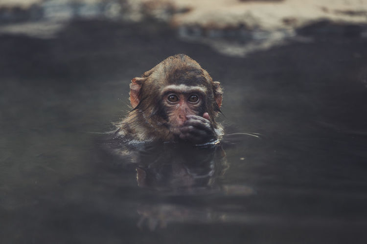 Portrait of a monkey with dog in water
