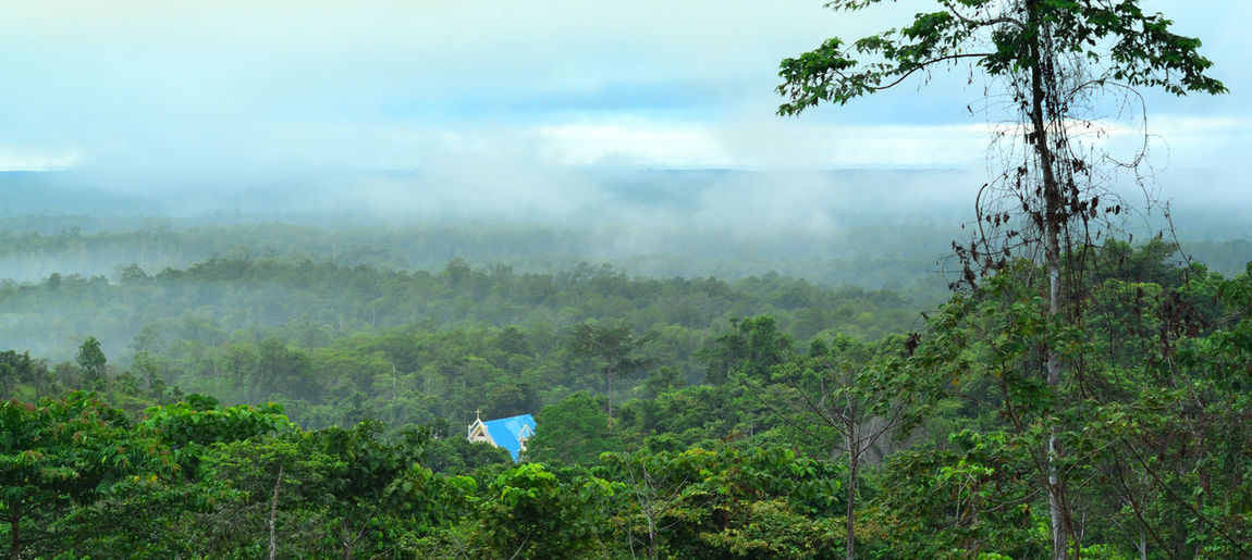 gloomy day- forest spirit Beauty In Nature Bintuni Bintunibay Blue Day Fog Foggy Morning Forest Forest Photography Forestspir Gloomy Day Growth Hazy  Landscape Mist Mountain Nature No People Outdoors Plant Scenics Sky Sunrise Tranquility Tree
