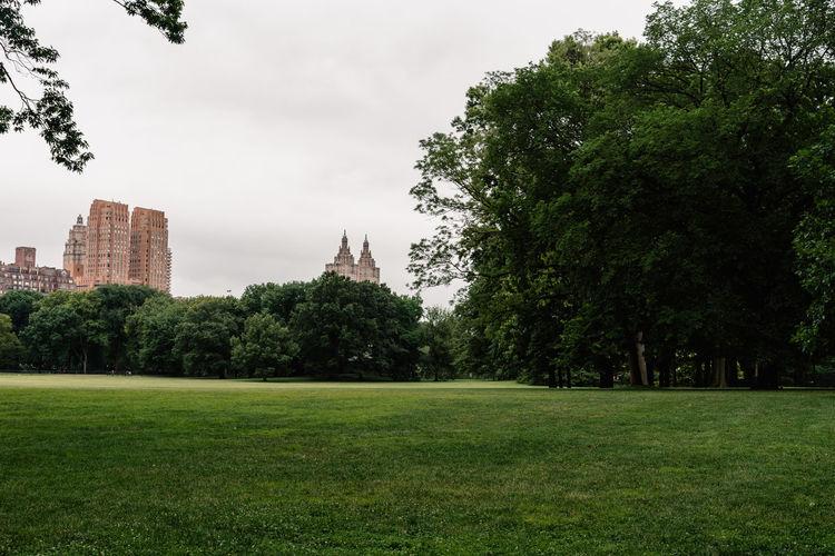 Trees in park against buildings