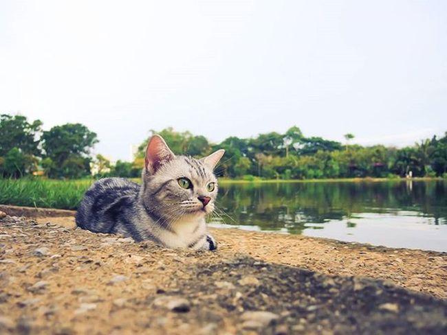 Chaba cat บ้านแมวหนวด แมว Cats Chill Holiday Sunset Neko Tree Amzingthailand Phuket Thailand Trip Travel Island Smile Nikon Garden