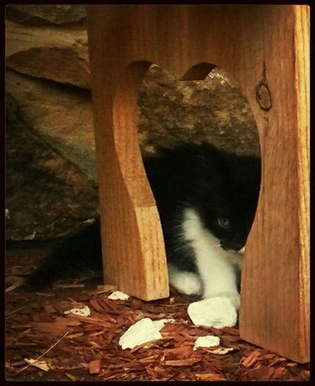 peekaboo Kitten