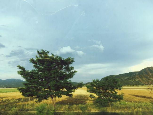 Birzamanlartatilken Tree Yoldangeçerken Manzara Dediğin  Plant Tree Sky Beauty In Nature Cloud - Sky Field Tranquil Scene Grass Rural Scene Day Nature Green Color Scenics - Nature No People Landscape