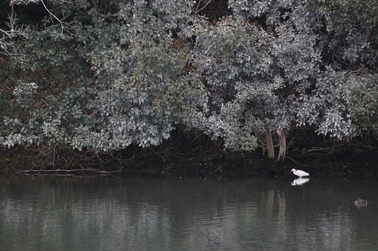 Egretta Little Egret Egret Bird Bird Watching Silence Lake Lake View OpenEdit Open Edit EyeEm Nature Lover