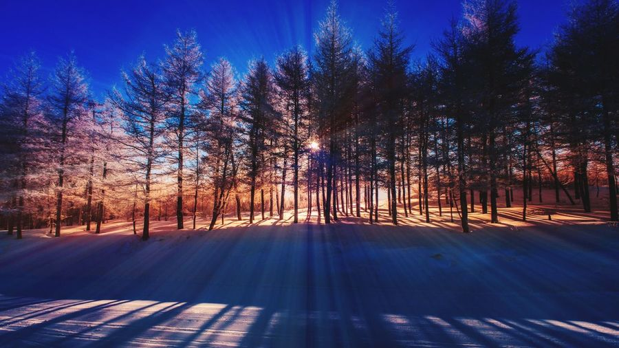 Snow mountain light Landscape Sunlight Countryside Winter Beauty In Nature Beijing, China Mountain Trees