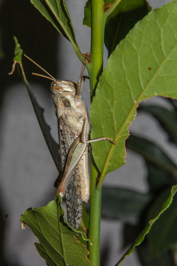Locust on plant