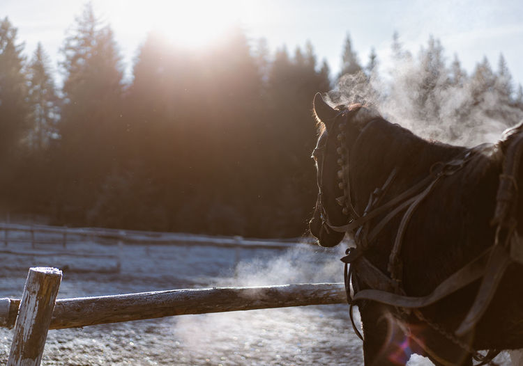 View of a horse on snow covered landscape